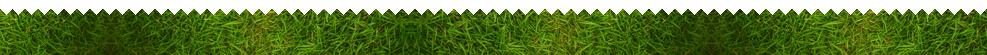 Bottom Grass