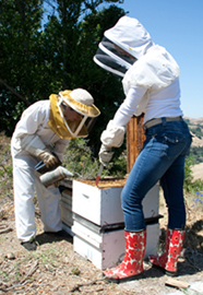 Hive Inspection
